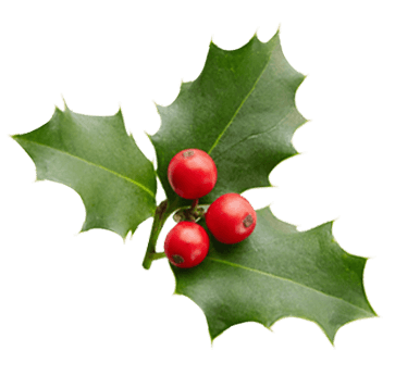 Holly with three leaves