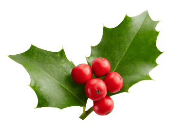 Holly with two leaves